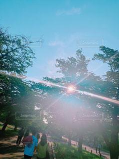自然,風景,アウトドア,空,森林,屋外,大阪,太陽,綺麗,晴れ,青空,夕方,山,光,樹木,旅行,野外,青色,草木,穴場,インスタ映え