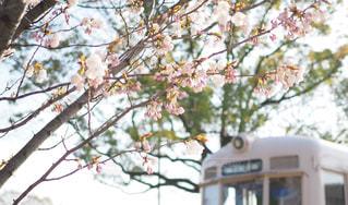 空,公園,春,桜,屋外,京都,電車,散歩,花見,レジャー,お散歩,ライフスタイル,おでかけ,フォトジェニック,インスタ映え