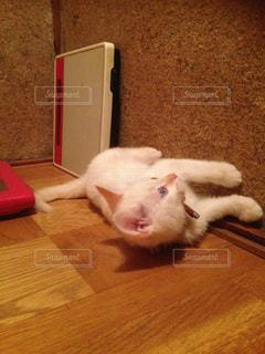 トリックアート子猫の写真・画像素材[2301474]