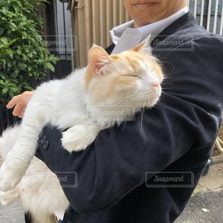 男性,猫,動物,ペット,人物,白猫,抱っこ,ネコ,スーツ