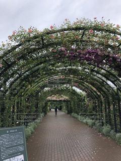 公園,屋外,ピンク,緑,赤,青空,散歩,バラ,景色,道,歩道,散歩道,草木,フローラ