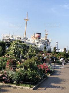 日本丸とバラの散歩道の写真・画像素材[2260544]