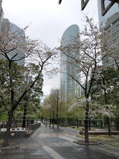 空,公園,建物,桜,屋外,ピンク,緑,白,散歩,樹木,都会,高層ビル,散歩道,通り,ガーデン