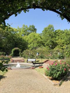 空,公園,花,屋外,緑,青空,青,バラ,景色,道,噴水,アーチ,地面,散歩道,ハウステンボス,お出かけ,ガーデン