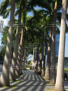 ヤシの木の散歩道の写真・画像素材[2274261]