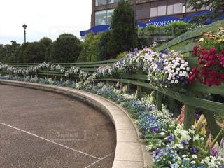 公園,屋外,ピンク,緑,赤,白,青空,散歩,紫,景色,散歩道,港の見える丘公園,ハンギングバスケット