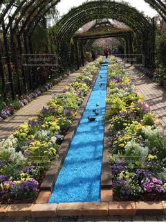 公園,花,春,屋外,ピンク,緑,青空,青,散歩,川,アーチ,散歩道,ブロッサム,横浜イングリッシュガーデン