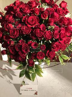 花,緑,赤,ハート,たくさん,長崎,ハウステンボス,草木,ブルーム,永遠の愛,パレスハウステンボス,フローラ,99本