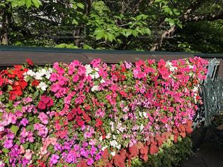 グラデーションになった花の塀の写真・画像素材[2349508]