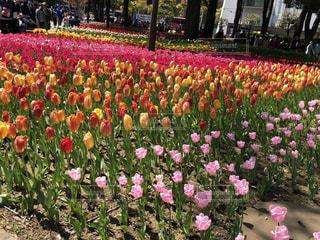 横浜公園の写真・画像素材[2352317]