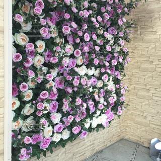 素敵な薔薇の切り花の壁の写真・画像素材[2371412]