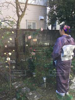 バラと和服の写真・画像素材[2393114]