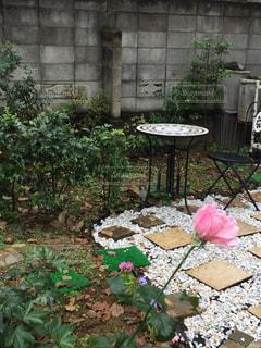 屋外,ピンク,白,バラ,椅子,テーブル,樹木,砂利,石,ナチュラル,雰囲気,草木,ガーデン,ブロッサム,フィルムフォト