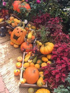 八百屋さんみたいにたくさんのハロウィンのかぼちゃの写真・画像素材[2506936]
