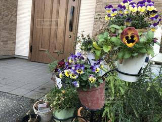 満開の花の写真・画像素材[2987861]