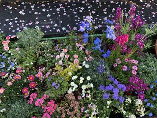 春の花壇の写真・画像素材[4350935]