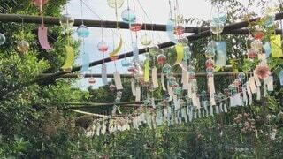 空,夏,緑,赤,白,かわいい,カラフル,青空,青,バラ,オレンジ,ガラス,樹木,風鈴,オシャレ,竹,道,可愛い,バラ園,たくさん,お洒落,遊び場,黄,列,草木,おしゃれ,揺れる,夏草
