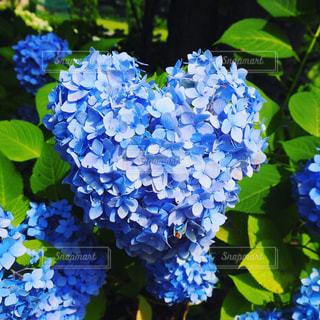 花のクローズアップの写真・画像素材[2263490]