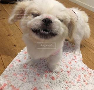 犬の写真・画像素材[2325892]