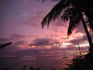ヤシの木の隣の水の上の夕日の写真・画像素材[2411453]