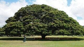 女性,自然,空,公園,夏,木,屋外,緑,雲,女の子,草,樹木,人,草木,モアナルアガーデン,ハワイら