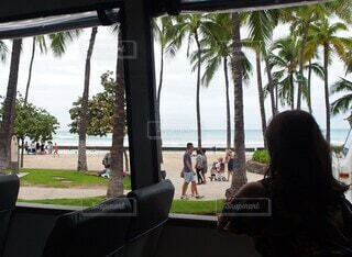 女性,海,空,ビーチ,窓,女の子,草,バス,ヤシの木,ハワイ,旅行券