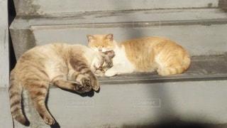 猫,動物,屋外,階段,散歩,寝ている,レジャー,お散歩,ほのぼの,ライフスタイル,おでかけ,のら猫,ネコ科の動物
