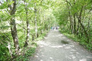 自然の写真・画像素材[2252702]