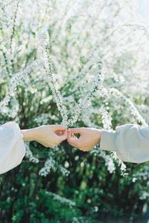 花を持つ手の写真・画像素材[3297307]
