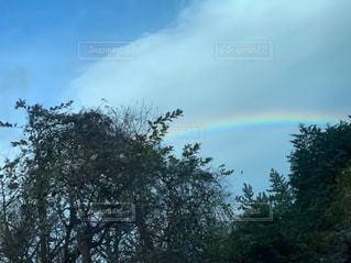 空と虹と木の写真・画像素材[2221028]