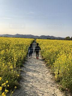 自然,風景,空,花,屋外,散歩,黄色,菜の花,草,菜の花畑,お散歩,おでかけ