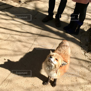 歩道を歩いている猫の写真・画像素材[2260282]