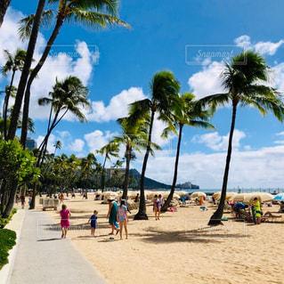ハワイのビーチの写真・画像素材[2262199]