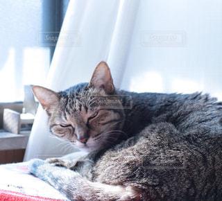 猫,動物,にゃんこ,屋内,かわいい,室内,昼寝,日差し,ねこ,ペット,人物,可愛い,cat,ひなたぼっこ,寝起き,ネコ,おひるね