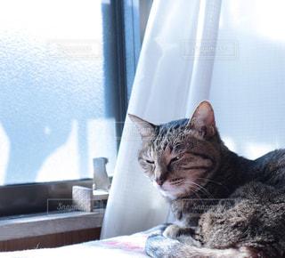 猫,動物,にゃんこ,屋内,窓,昼寝,ねこ,ペット,人物,座る,日光浴,昼,cat,ひなたぼっこ,寝起き,あったかい,ネコ,おひるね,かわいい可愛い