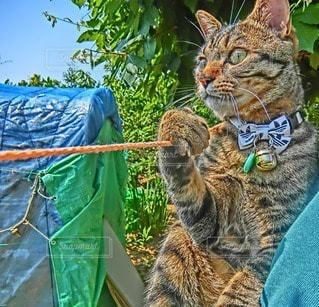 猫の写真・画像素材[14409]