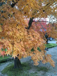 秋は紅葉狩り♪の写真・画像素材[2512077]
