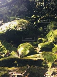 もののけの森の写真・画像素材[2625380]