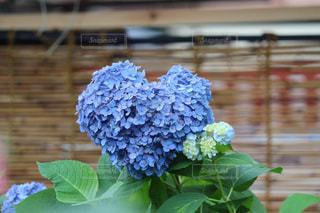 花,青,フラワー,アート,ハート,紫陽花,オシャレ