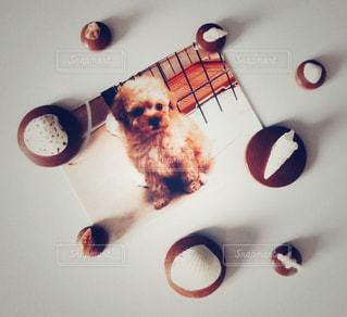 犬の写真・画像素材[2255139]