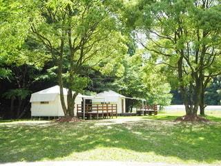 新緑のキャンプ場の写真・画像素材[2369807]