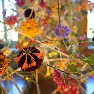 花のクローズアップの写真・画像素材[2370424]