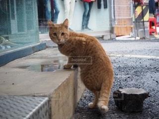 振り向いたネコの写真・画像素材[2888849]