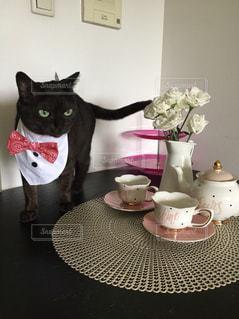 黒猫カフェの写真・画像素材[2252074]