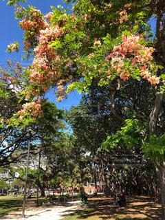 散歩,お花,ハワイ,レジャー,野外,ワイキキ,お散歩,晴れの日,ミドリ