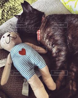 ぬいぐるみの上に横たわる猫の写真・画像素材[2292002]