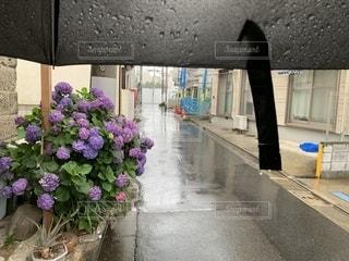 傘の内側からのぞむ紫陽花の写真・画像素材[2241203]