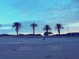 自然,空,屋外,ビーチ,島,砂浜,海岸,夜明け,樹木,旅行,ヤシの木,九州,長崎,長崎県,草木,五島列島,五島,宇久島
