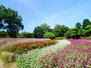 空,花,屋外,晴れ,散歩,景色,草,樹木,九州,レジャー,福岡,お散歩,ライフスタイル,草木,お出かけ,能古島,ガーデン