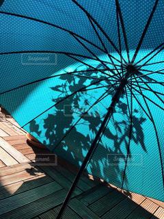 朝顔の映る傘の写真・画像素材[2229585]